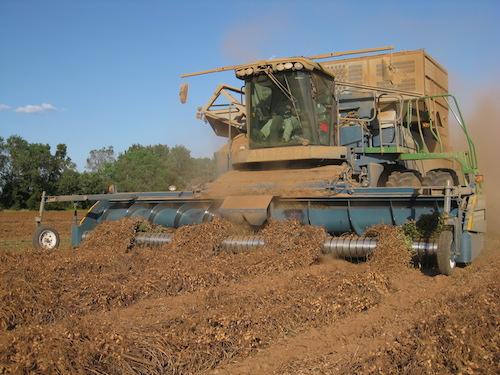 Amadas Self-Propelled Combine For Harvesting Peanuts